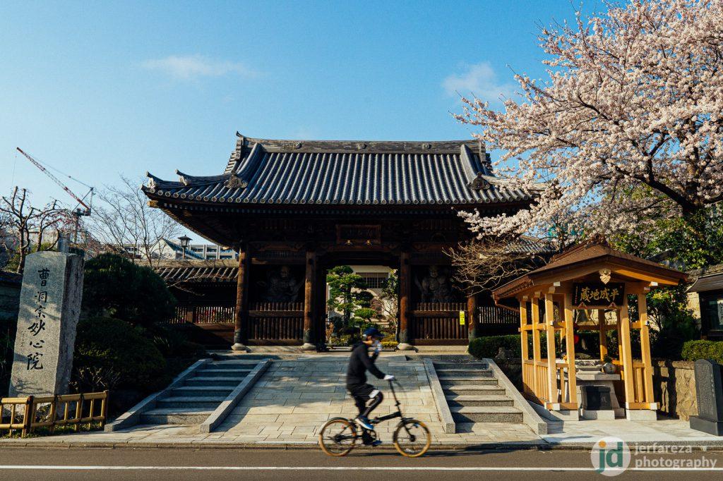 A temple with sakura, Sendai.